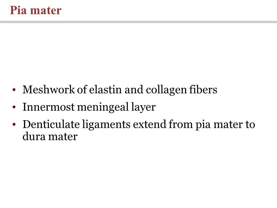 Pia mater Meshwork of elastin and collagen fibers