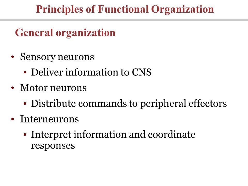 Principles of Functional Organization