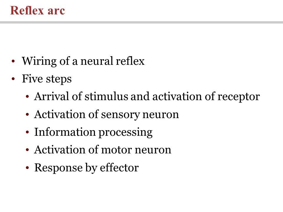 Reflex arc Wiring of a neural reflex Five steps