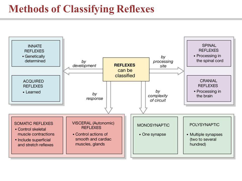 Methods of Classifying Reflexes