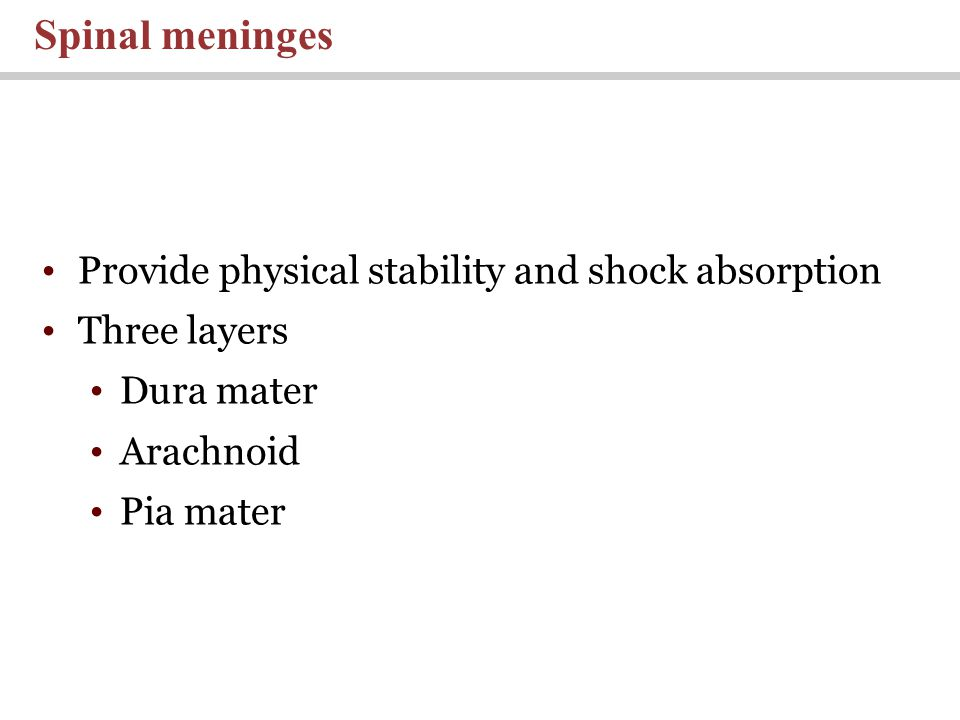 Spinal meninges Provide physical stability and shock absorption