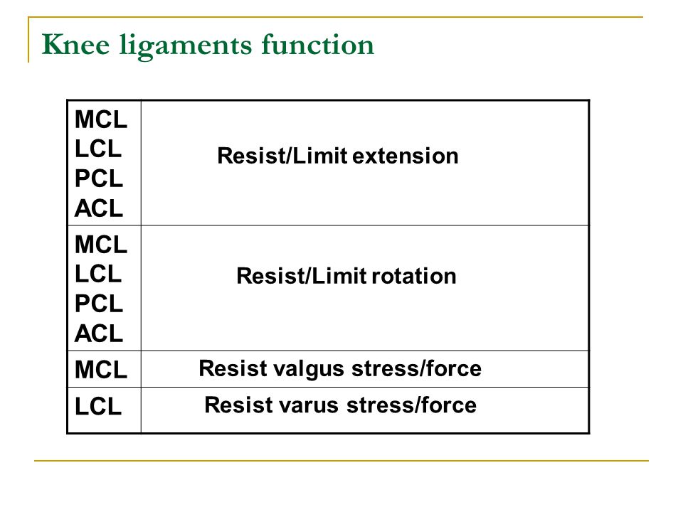 Knee ligaments function