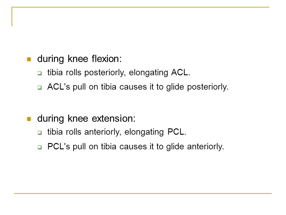 during knee extension:
