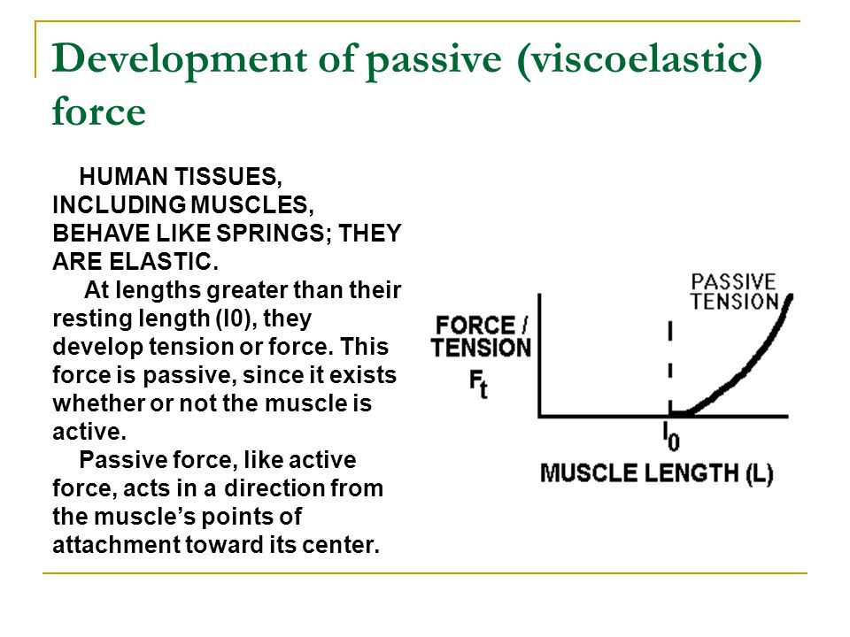 Development of passive (viscoelastic) force