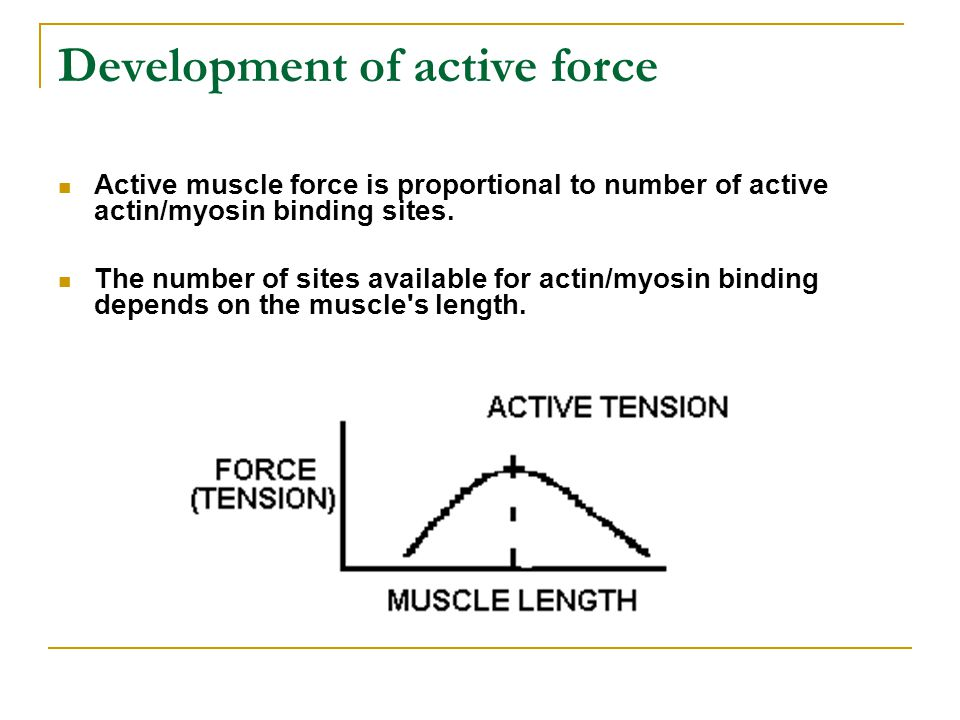 Development of active force