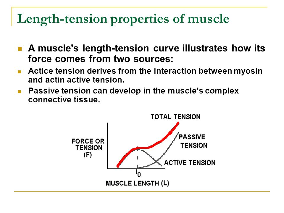 Length-tension properties of muscle