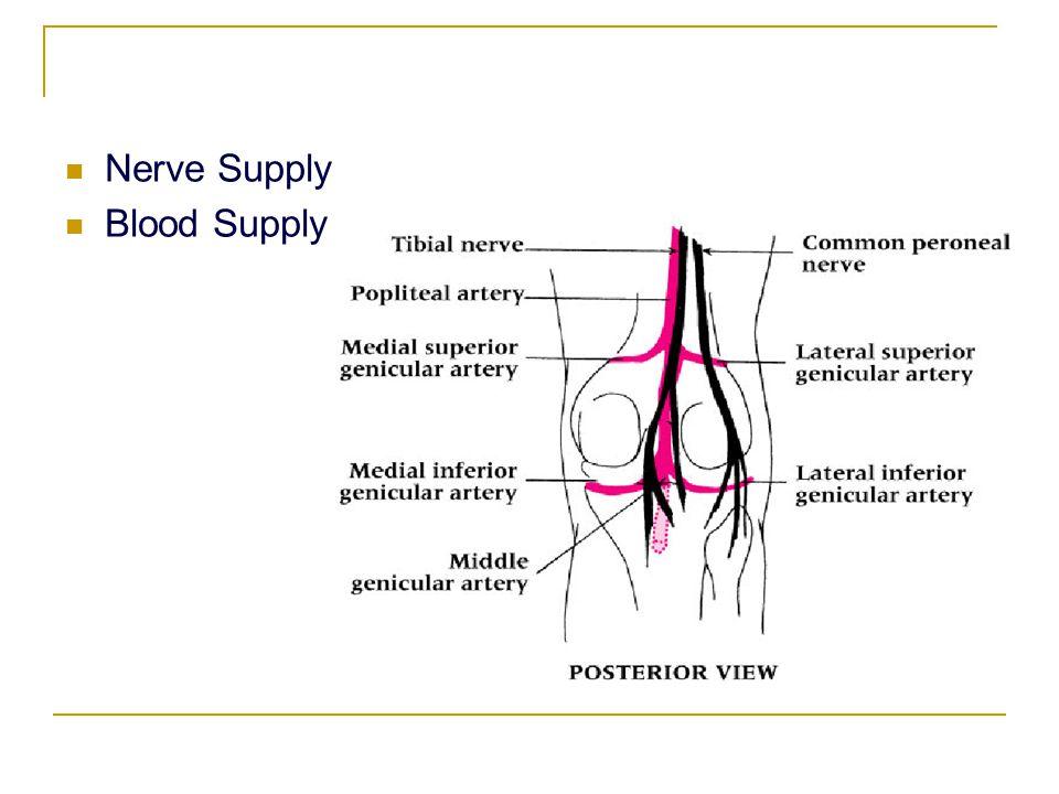 Nerve Supply Blood Supply