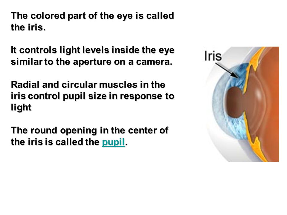 The colored part of the eye is called the iris.
