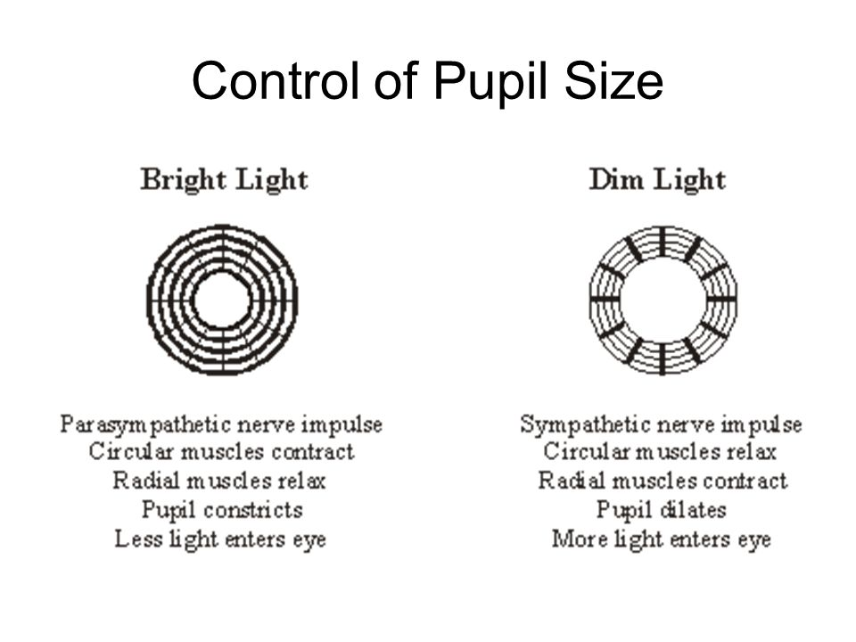 Control of Pupil Size