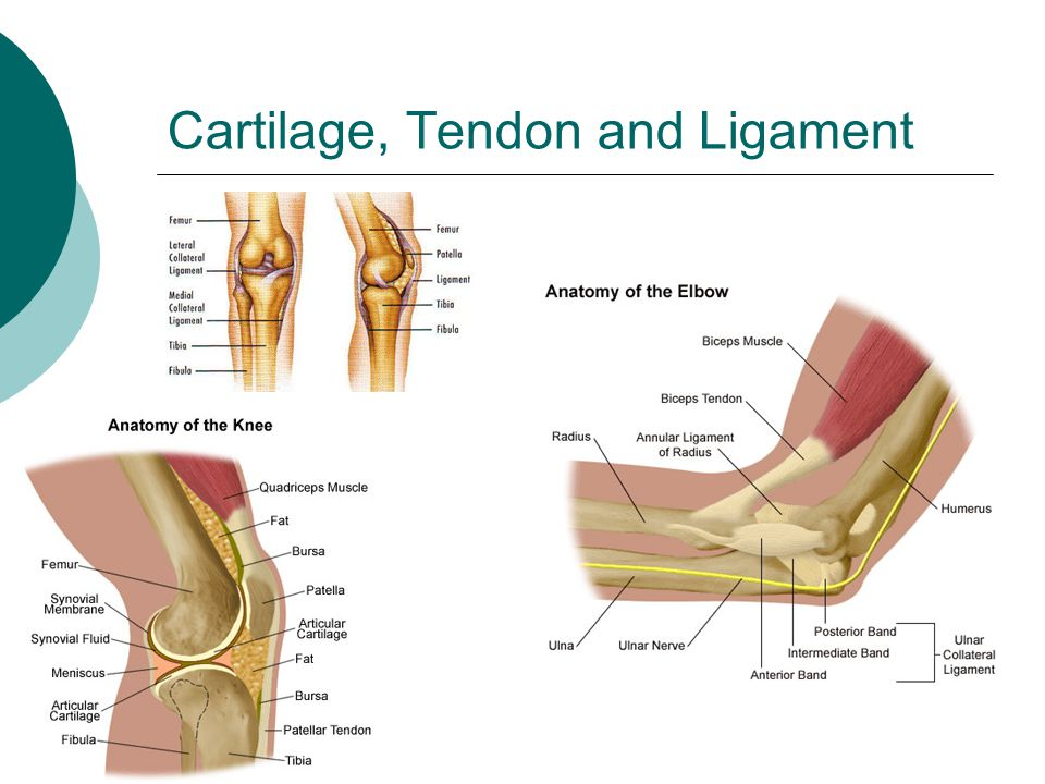 Cartilage, Tendon and Ligament