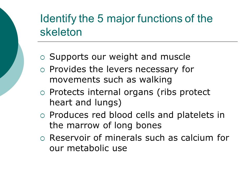 Identify the 5 major functions of the skeleton