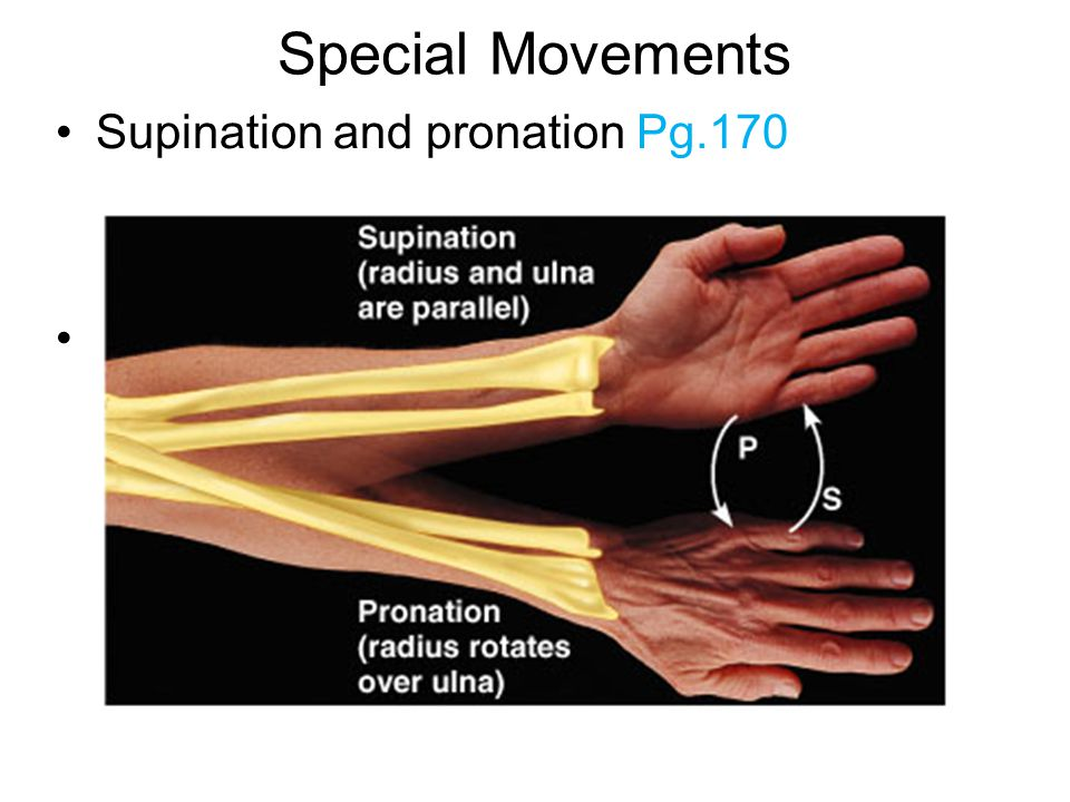 Special Movements Supination and pronation Pg.170