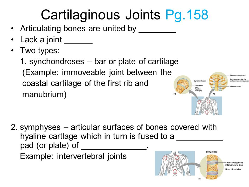 Cartilaginous Joints Pg.158