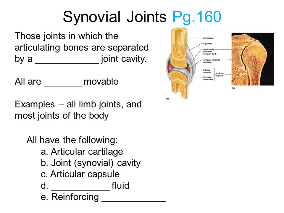 Synovial Joints Pg.160 Those joints in which the articulating bones are separated by a ____________ joint cavity.
