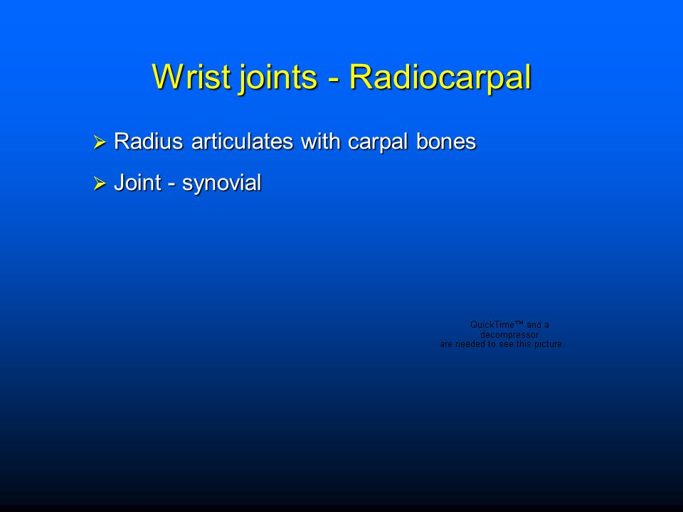Wrist joints - Radiocarpal