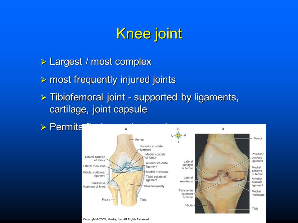 Knee joint Largest / most complex most frequently injured joints