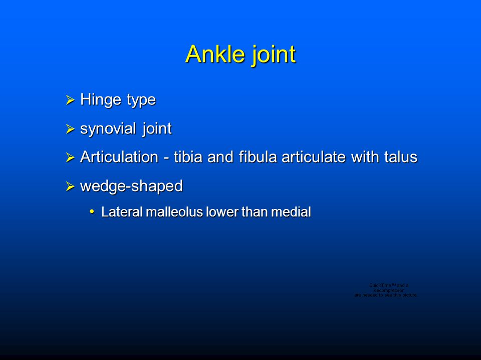 Ankle joint Hinge type synovial joint