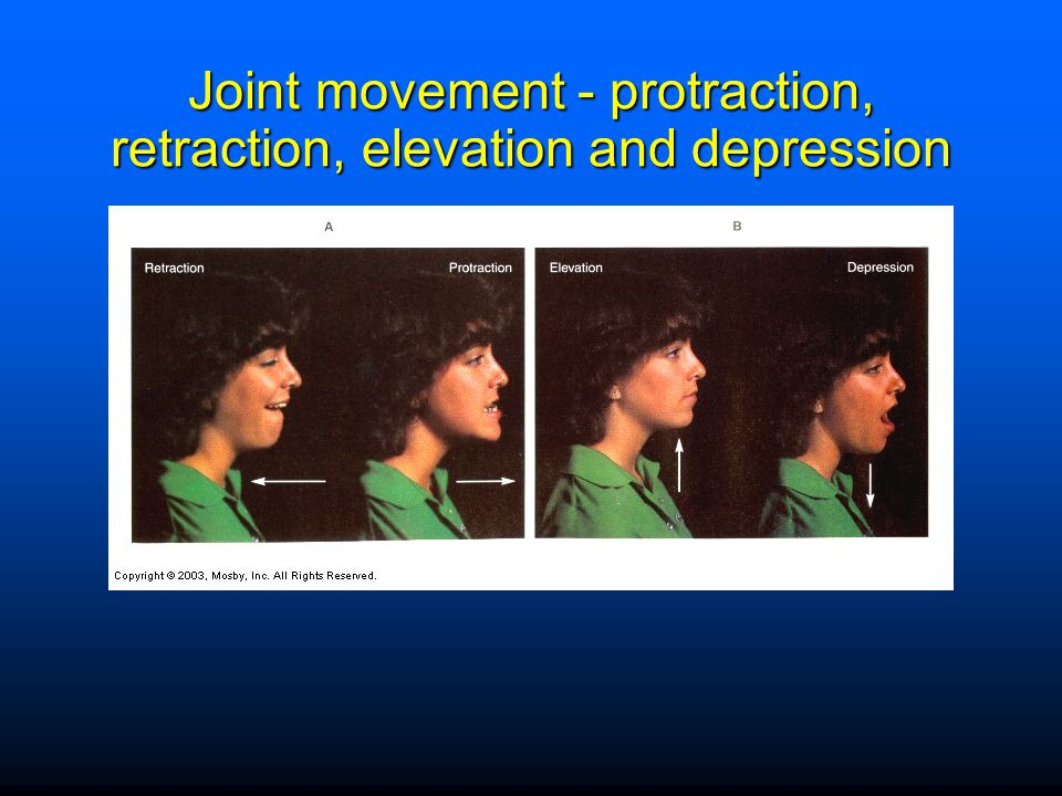Joint movement - protraction, retraction, elevation and depression