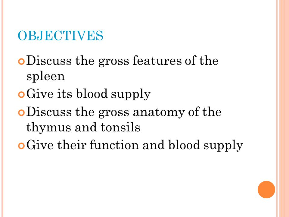 objectives Discuss the gross features of the spleen
