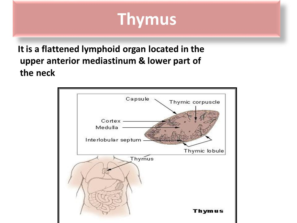 Thymus Introduction.