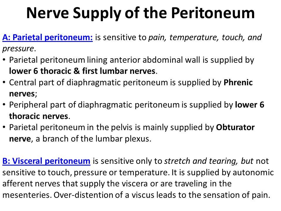 Nerve Supply of the Peritoneum