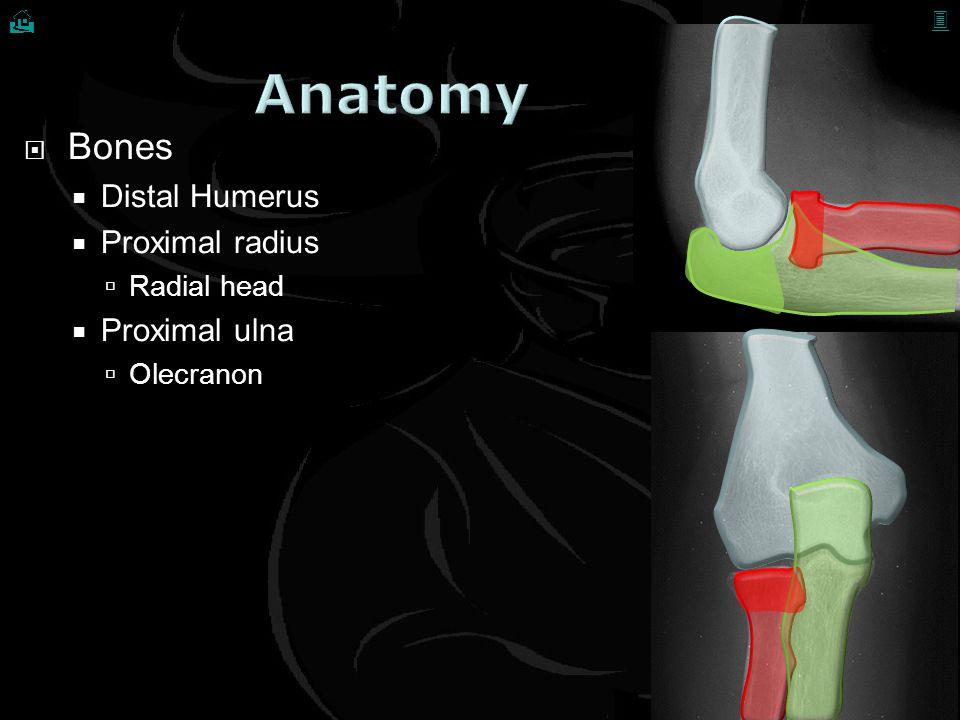 Anatomy Bones Distal Humerus Proximal radius Proximal ulna Radial head
