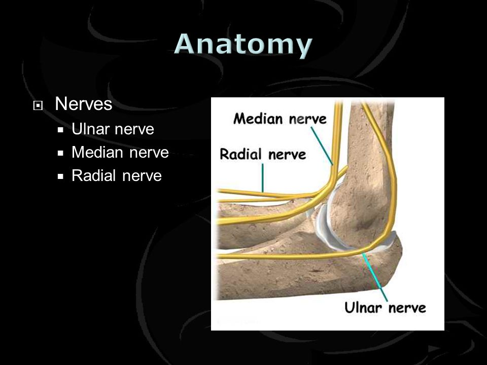 Anatomy Nerves Ulnar nerve Median nerve Radial nerve