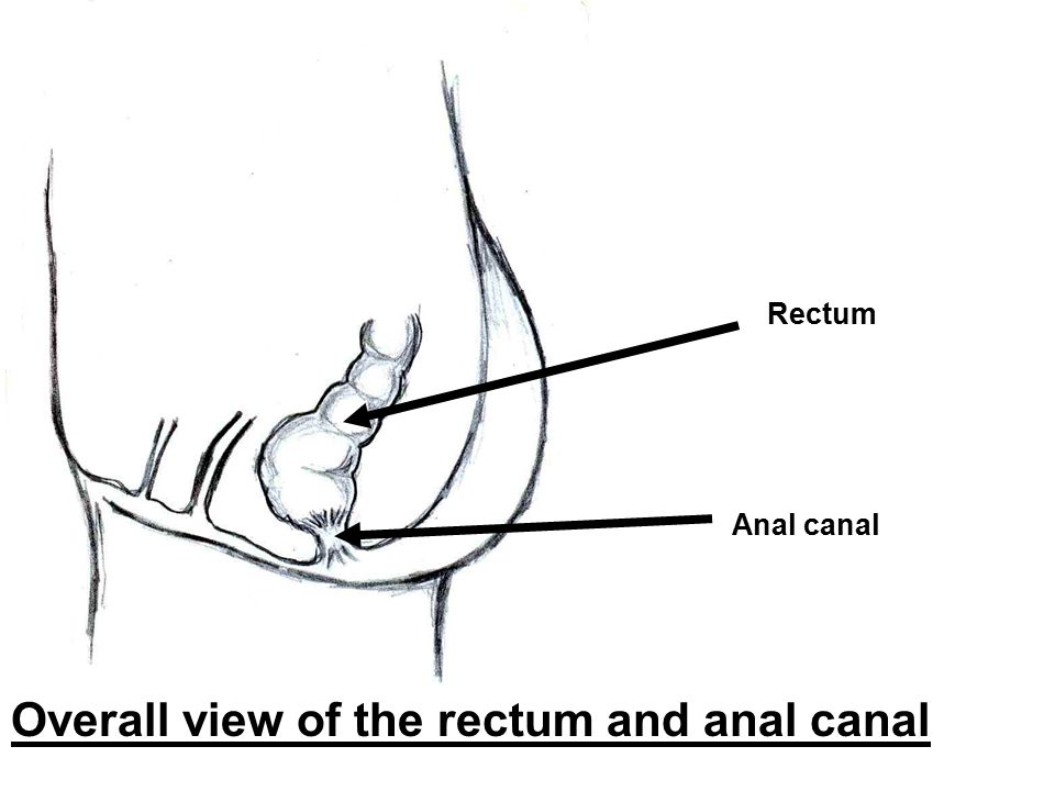 Overall view of the rectum and anal canal