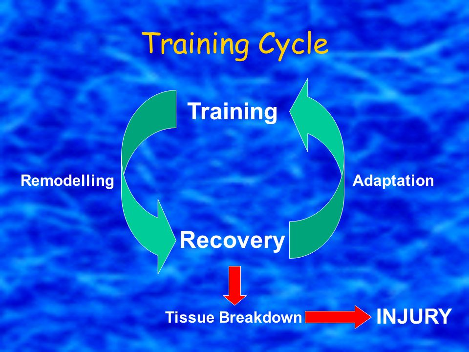 Training Cycle Training Recovery INJURY Remodelling Adaptation