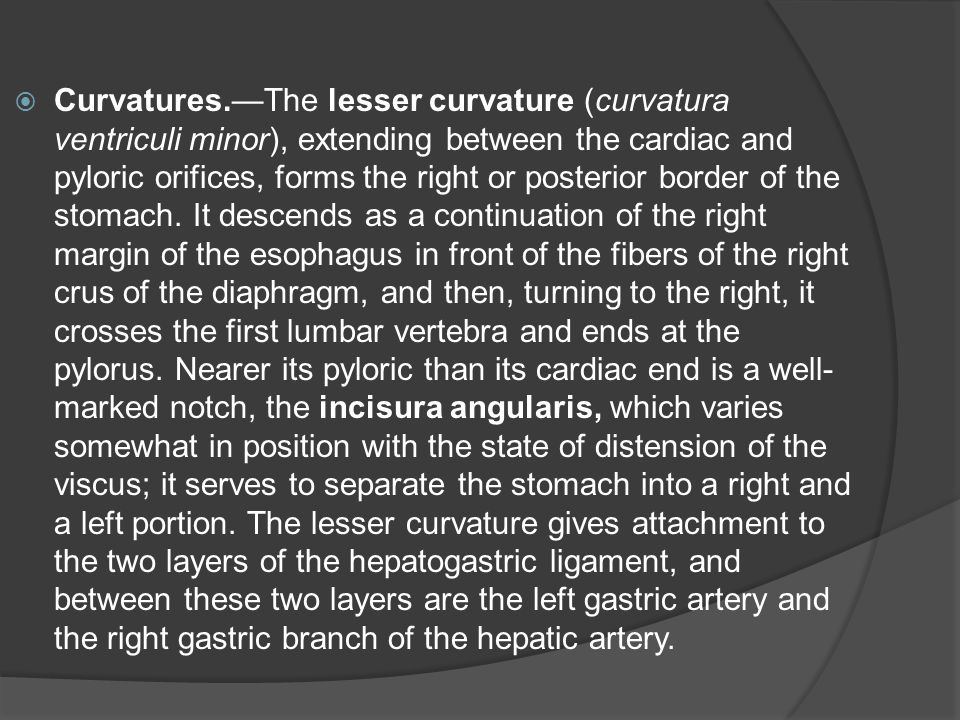 Curvatures.—The lesser curvature (curvatura ventriculi minor), extending between the cardiac and pyloric orifices, forms the right or posterior border of the stomach.