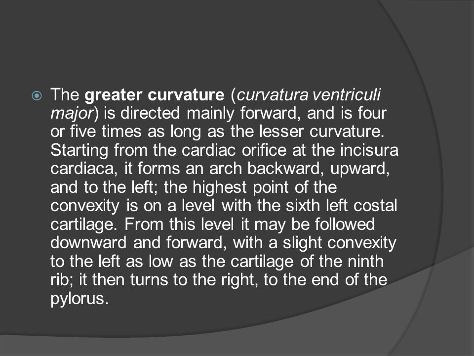 The greater curvature (curvatura ventriculi major) is directed mainly forward, and is four or five times as long as the lesser curvature.