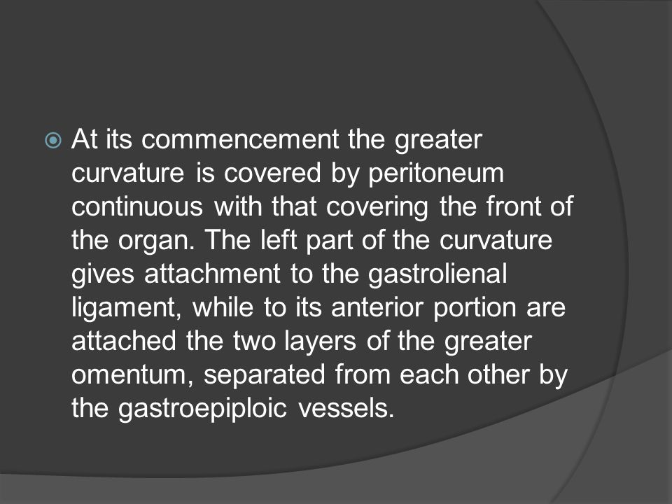 At its commencement the greater curvature is covered by peritoneum continuous with that covering the front of the organ.
