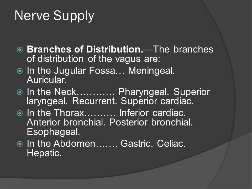 Nerve Supply Branches of Distribution.—The branches of distribution of the vagus are: In the Jugular Fossa… Meningeal. Auricular.