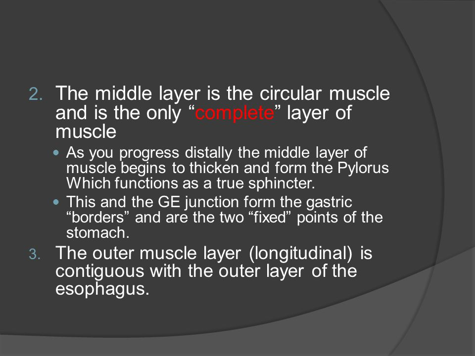 The middle layer is the circular muscle and is the only complete layer of muscle