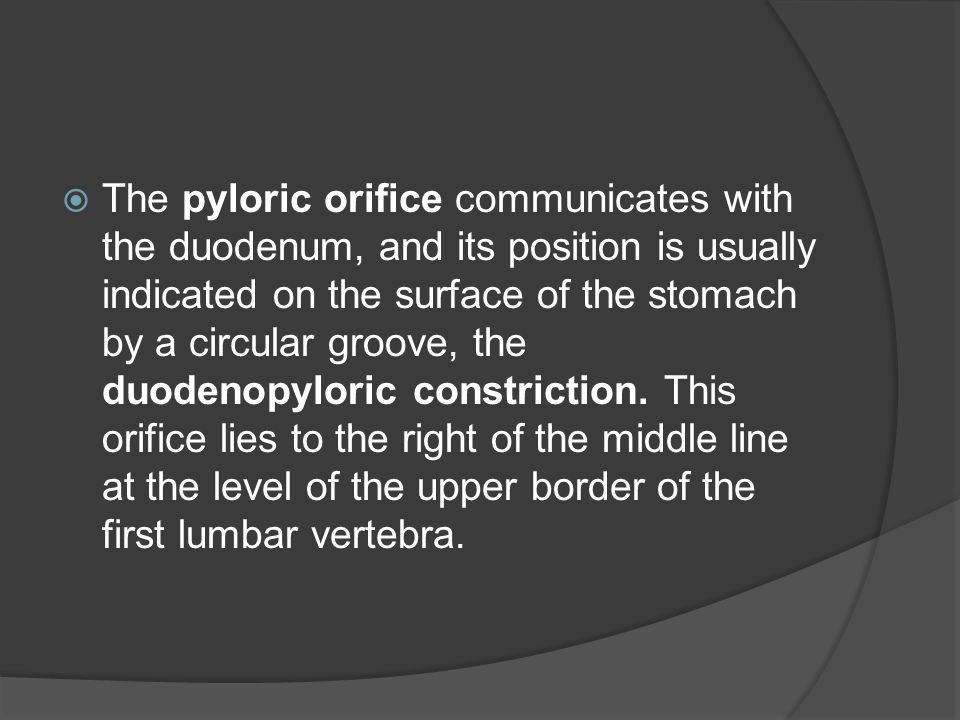 The pyloric orifice communicates with the duodenum, and its position is usually indicated on the surface of the stomach by a circular groove, the duodenopyloric constriction.