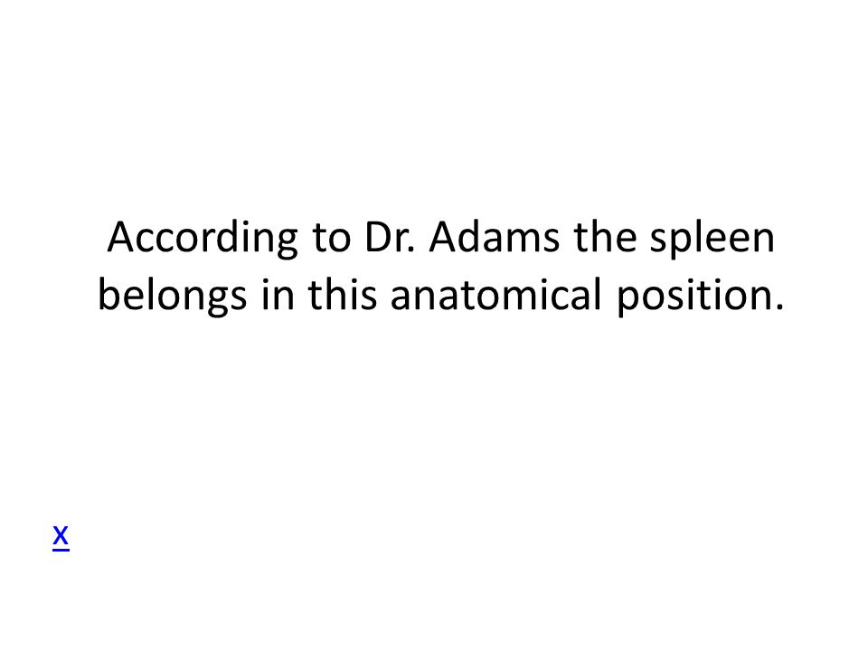 According to Dr. Adams the spleen belongs in this anatomical position.