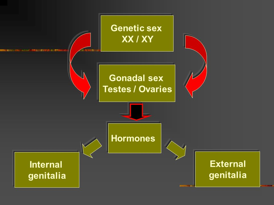 Genetic sex XX / XY Gonadal sex Testes / Ovaries Hormones Internal genitalia External genitalia