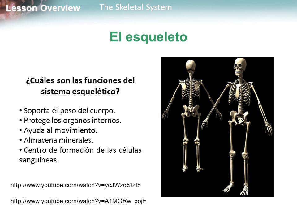 ¿Cuáles son las funciones del sistema esquelético