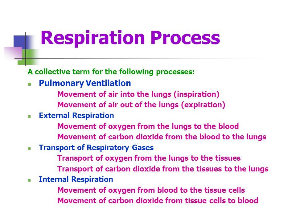 Respiration Process Pulmonary Ventilation