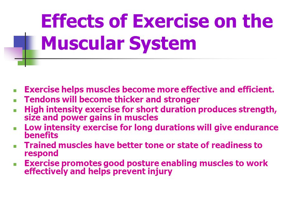 Effects of Exercise on the Muscular System