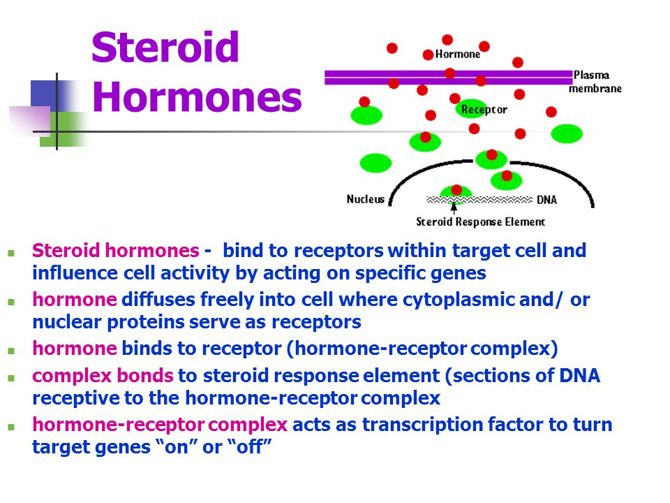 Steroid Hormones Steroid hormones - bind to receptors within target cell and influence cell activity by acting on specific genes.