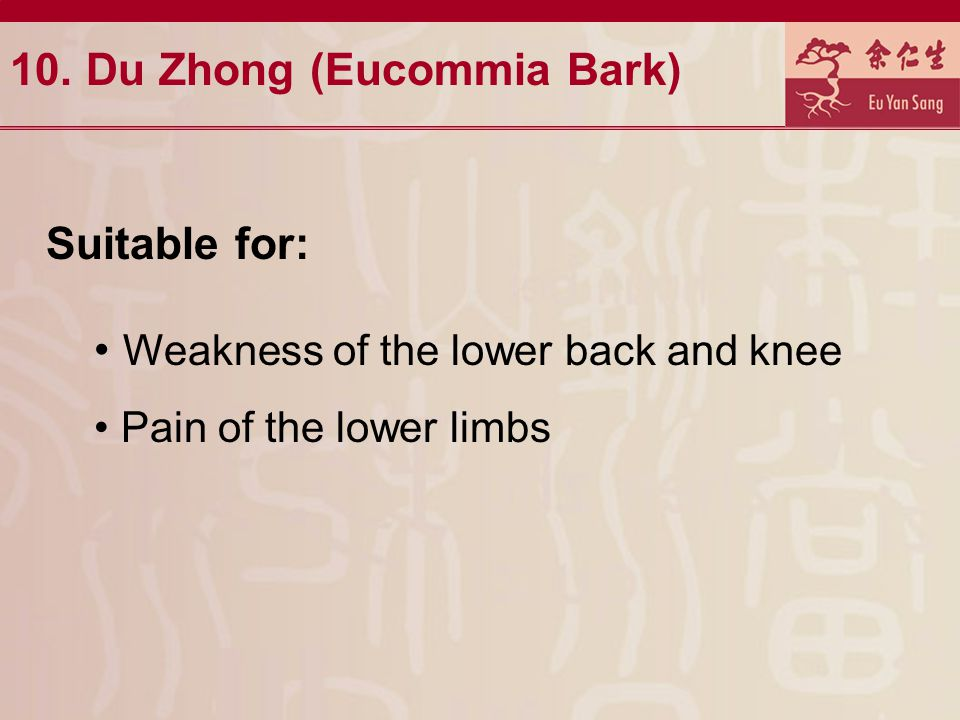 10. Du Zhong (Eucommia Bark)