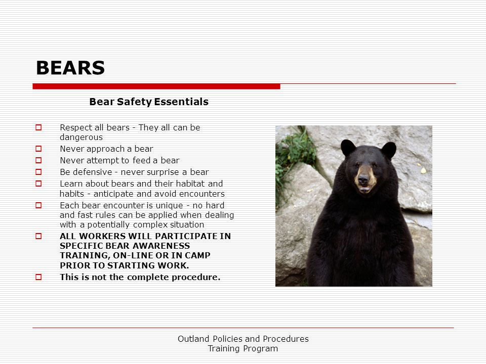 Bear Safety Essentials