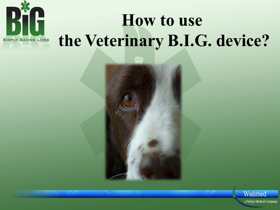 How to use the Veterinary B.I.G. device