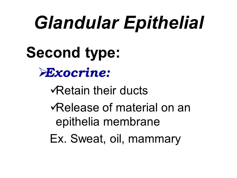Glandular Epithelial Second type: Exocrine: Retain their ducts