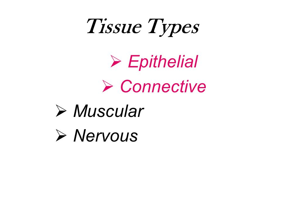 Tissue Types Epithelial Connective Muscular Nervous