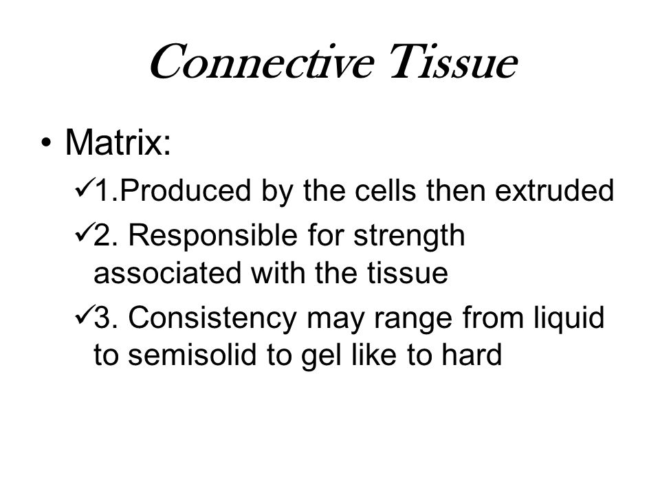 Connective Tissue Matrix: 1.Produced by the cells then extruded