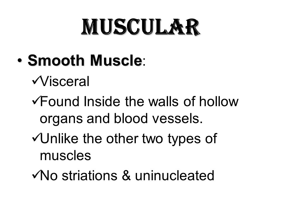 Muscular Smooth Muscle: Visceral