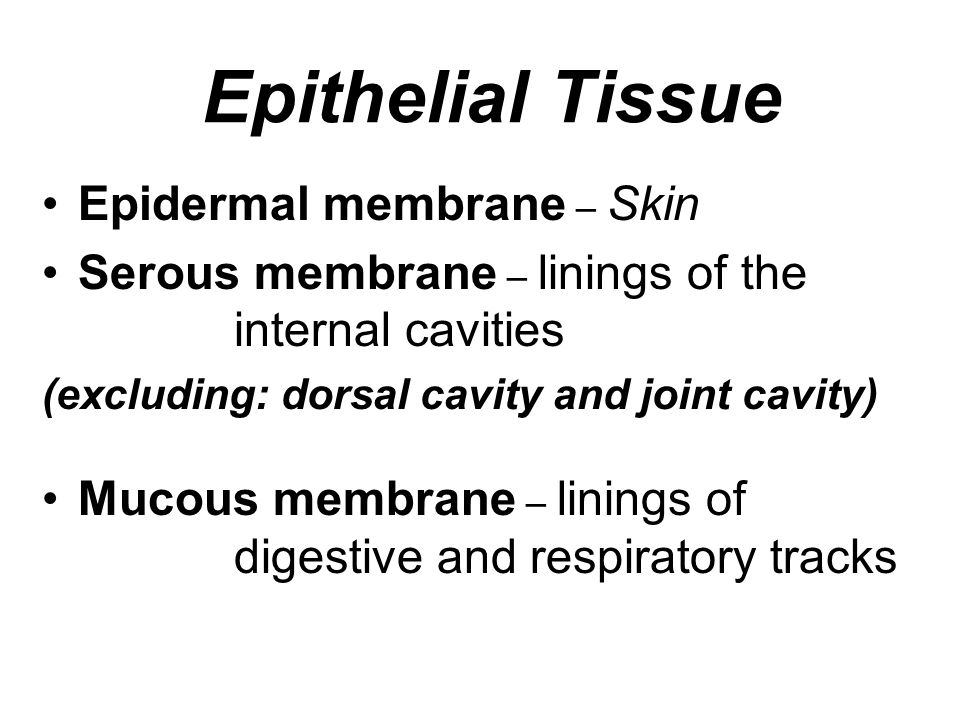 Epithelial Tissue Epidermal membrane – Skin