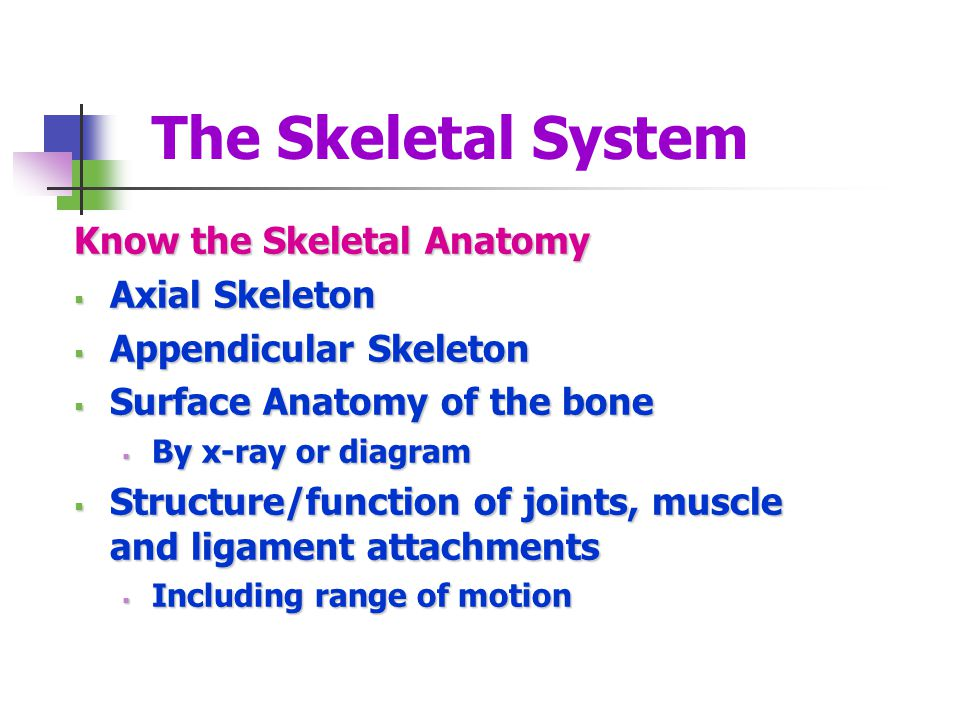 The Skeletal System Know the Skeletal Anatomy Axial Skeleton